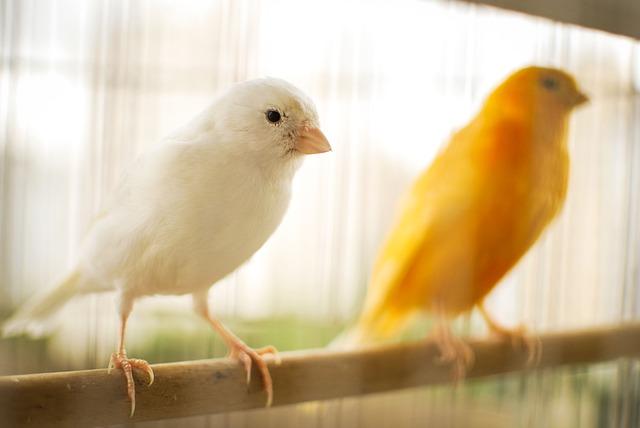 Avvelenamento da piombo negli uccelli da voliera
