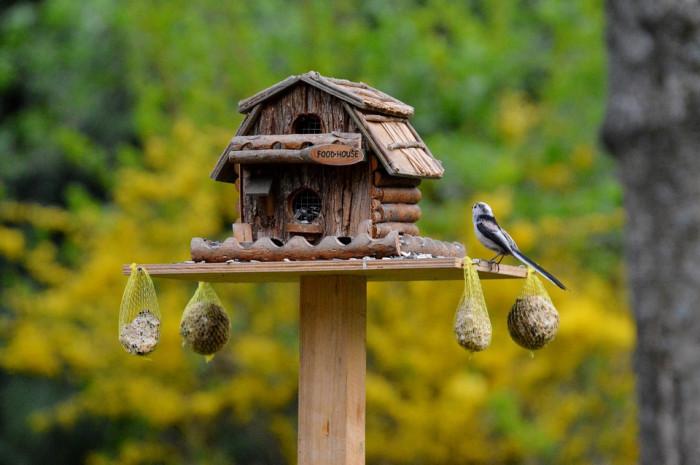 Bird feeding, come aiutare gli uccellini in inverno