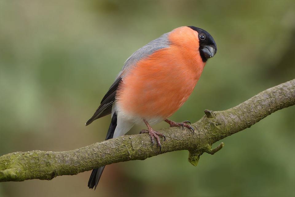 Specie aviarie nostrane tutelate dalla Convenzione di Washington