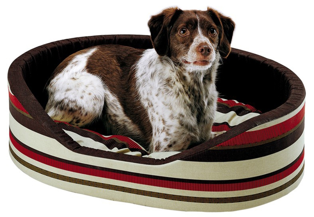 Accessori indispensabili per il cucciolo di cane