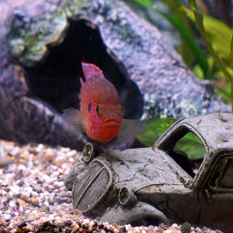 Anidride carbonica nell'acquario