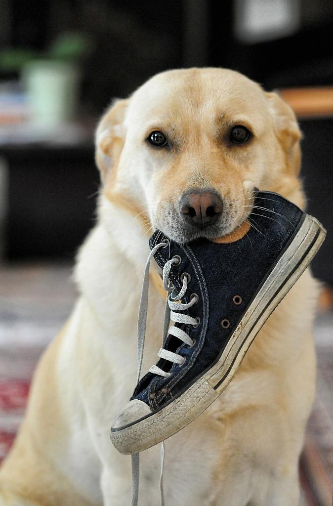 Comportamenti stereotipati nel cane