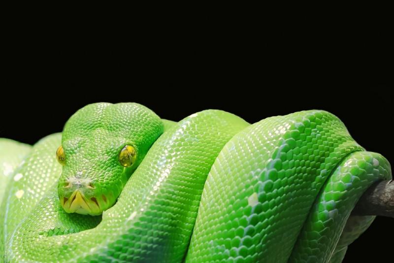 Alla scoperta dei serpenti