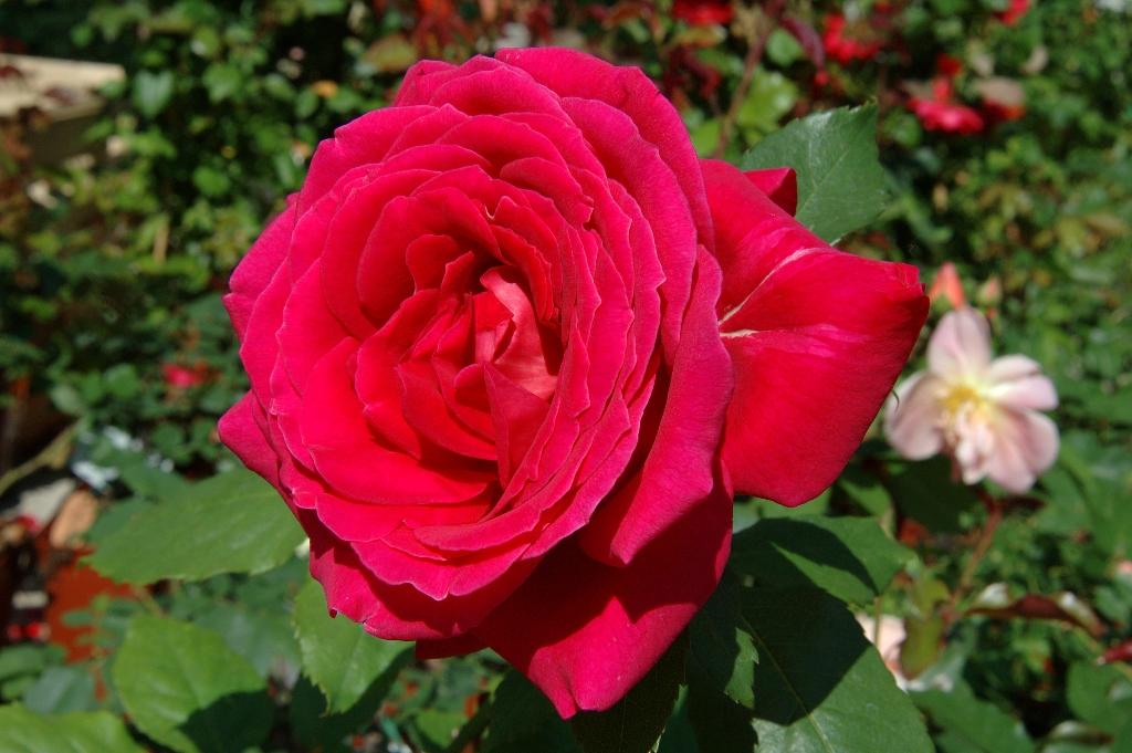 Consigli per apprezzare al meglio il profumo di fiori