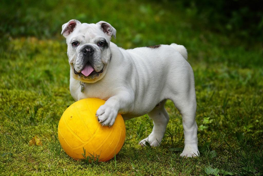 La corretta gestione del gioco con il cane