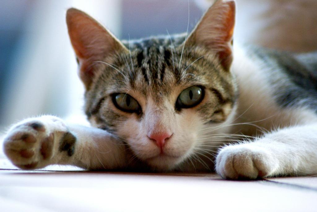 Cosa fare quando in casa arriva un gatto