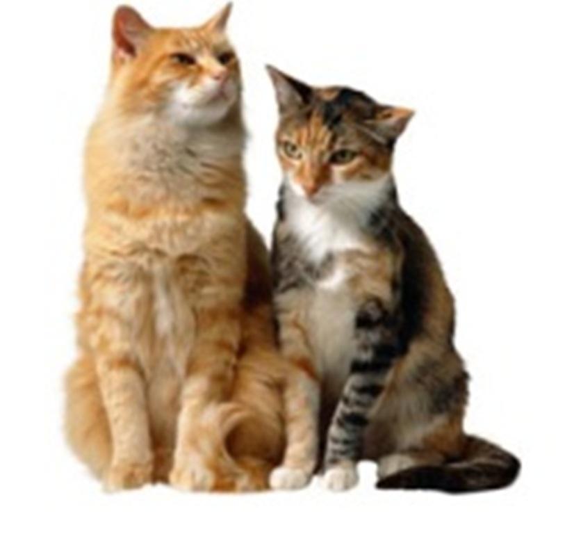 I gatti sono asociali