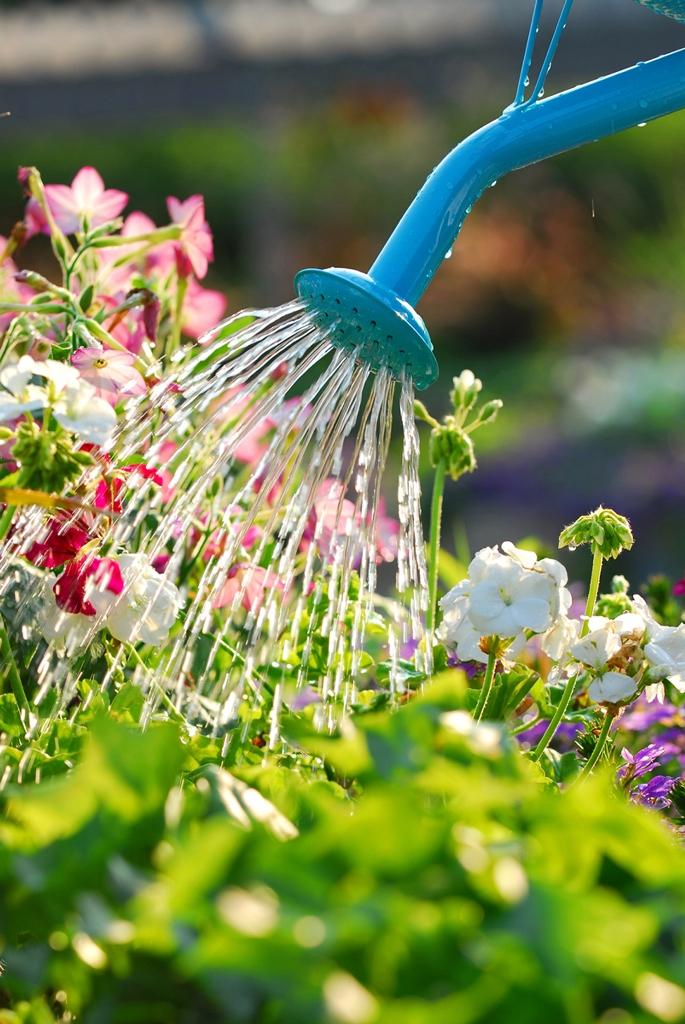 Irrigare le piante in terrazzo