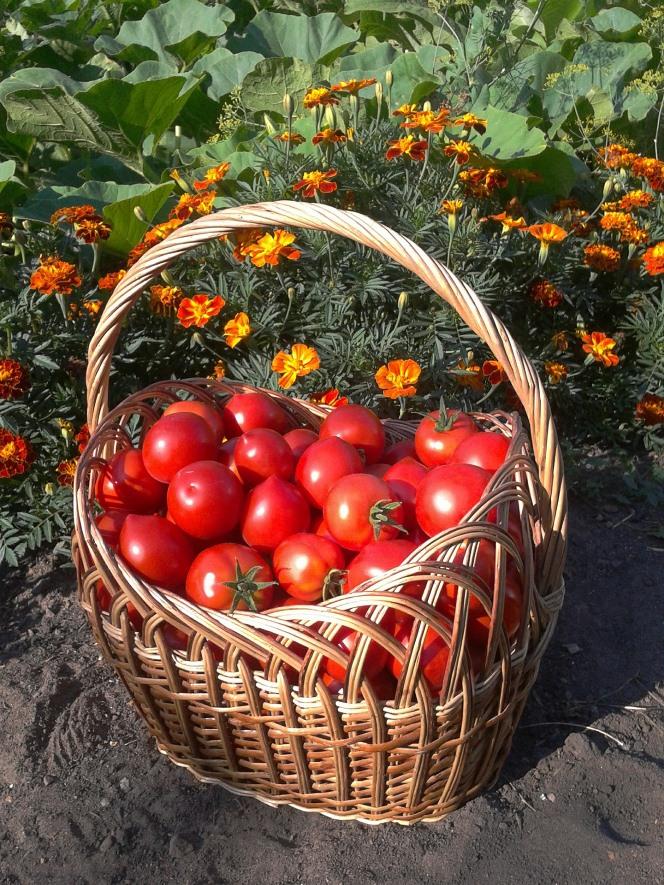 L'orto giardino, bello e utile