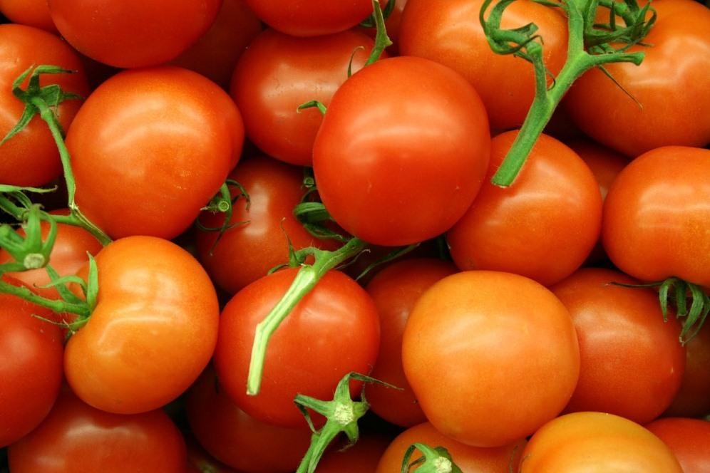 Pomodori, informazioni utili al trapianto e non solo…