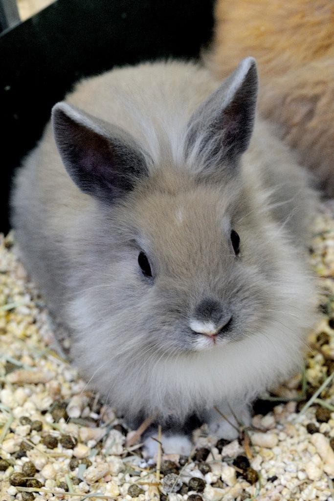 Le principali patologie dell'apparato digerente del coniglio