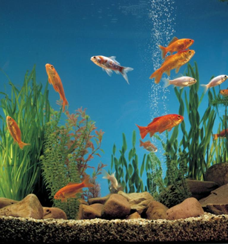 Serve cambiare l'acqua dell'acquario? Si perché…