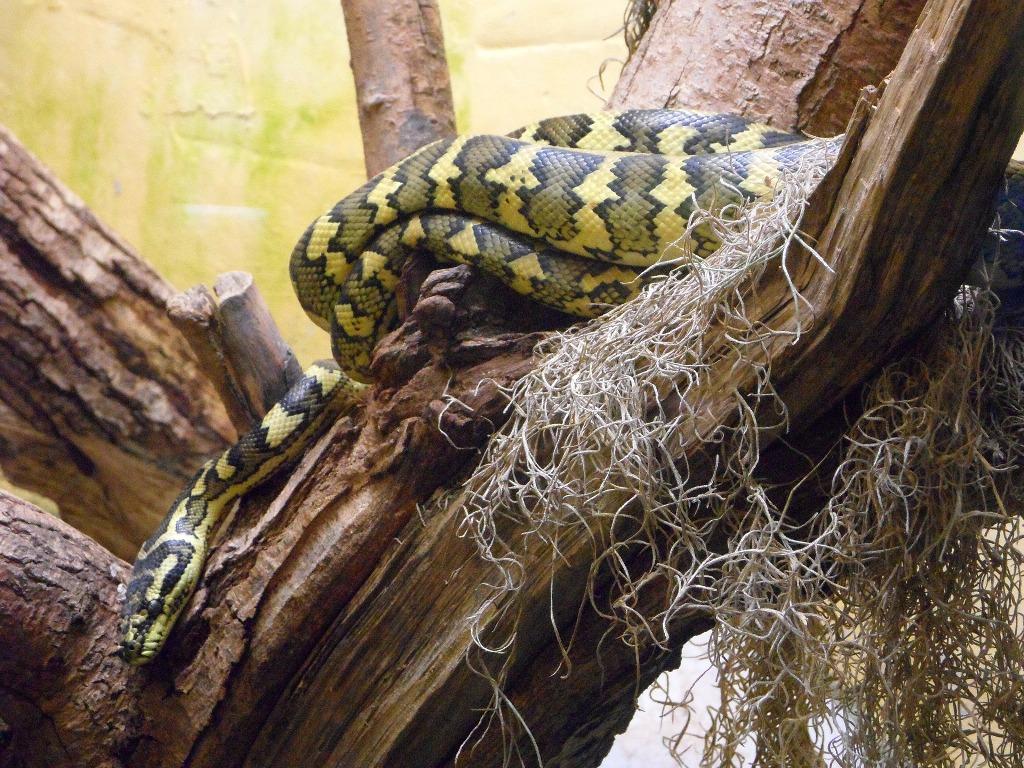 Terrario per i serpenti