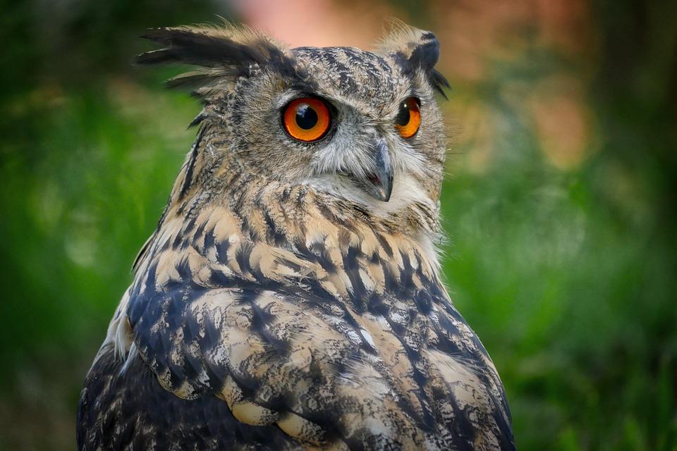 La falconiera, voliera per rapaci