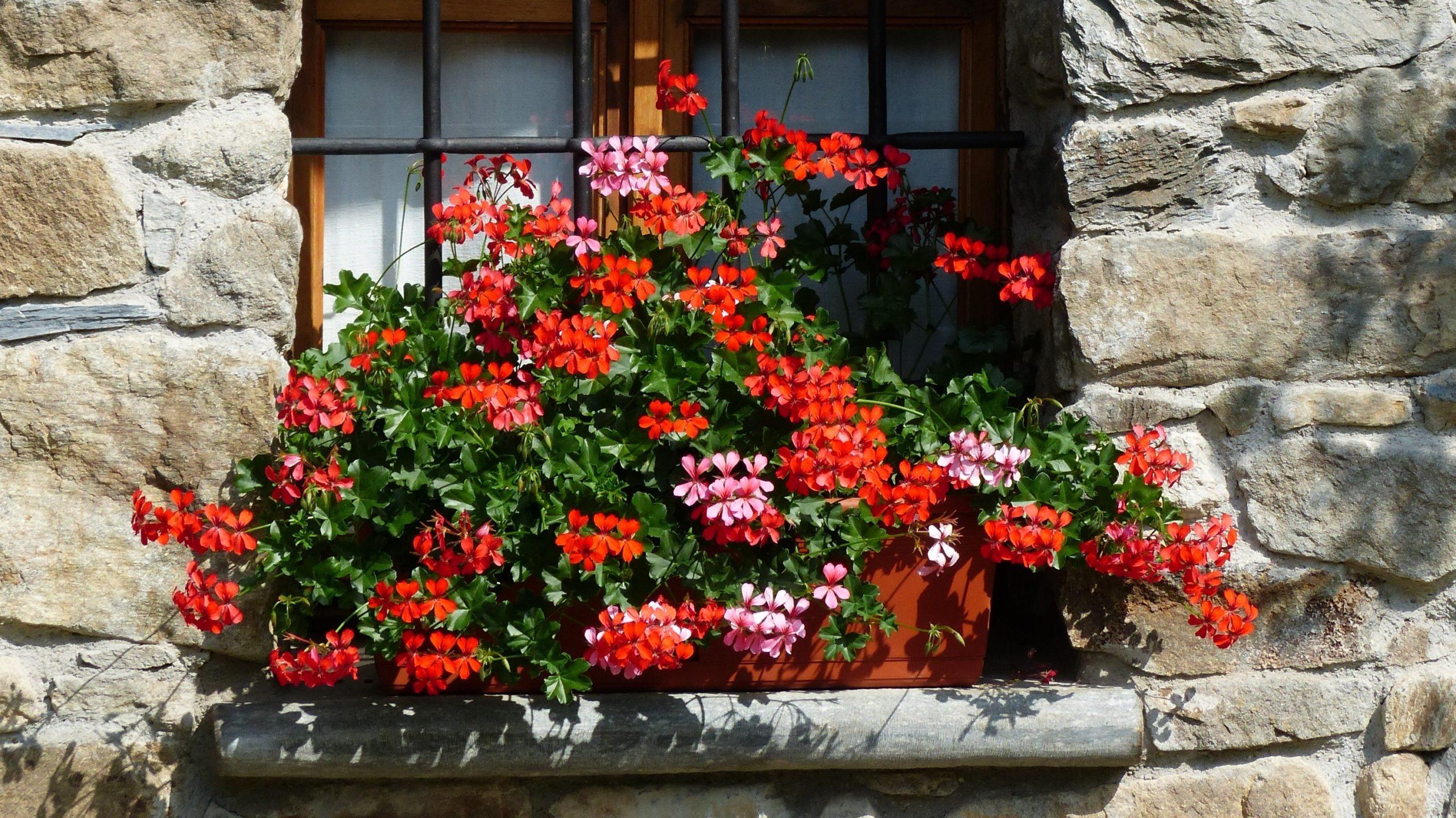 Balconi e terrazzi fioriti