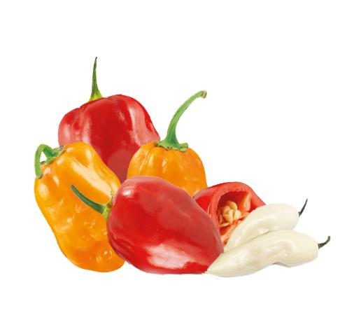 Peperoncino Habanero rosso, bianco e arancio