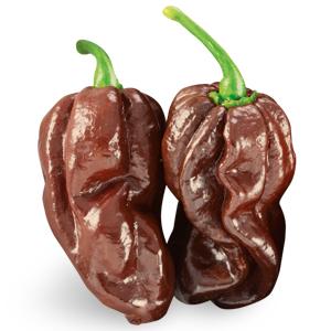 Peperoncino Habanero Chocolate