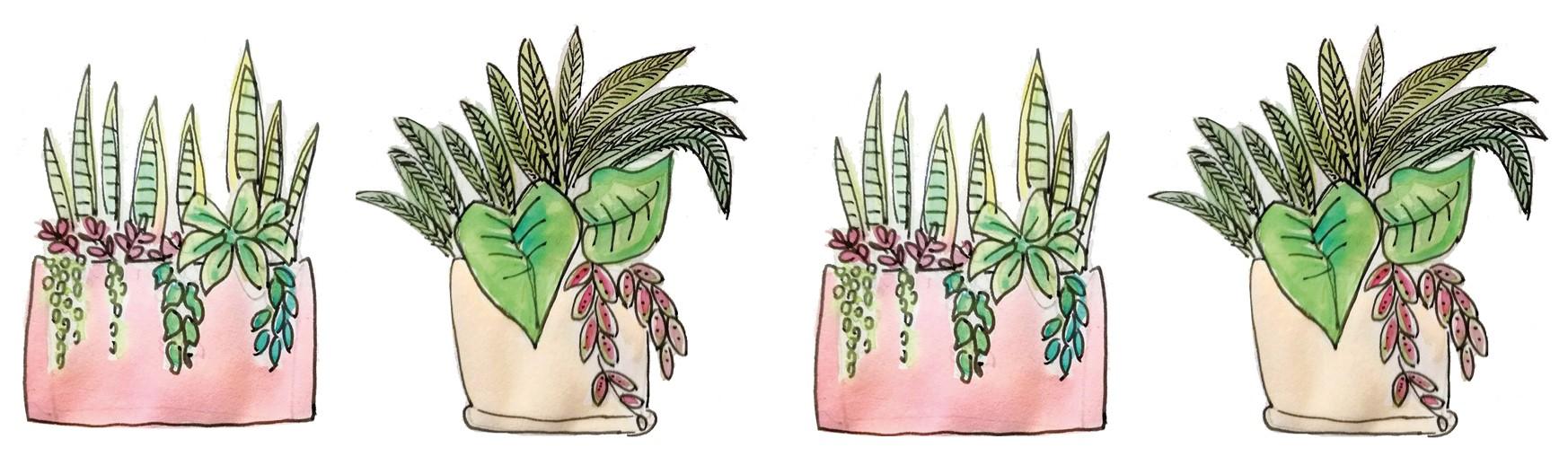 Workshop di composizioni con piante da interno