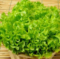 Le insalate da taglio