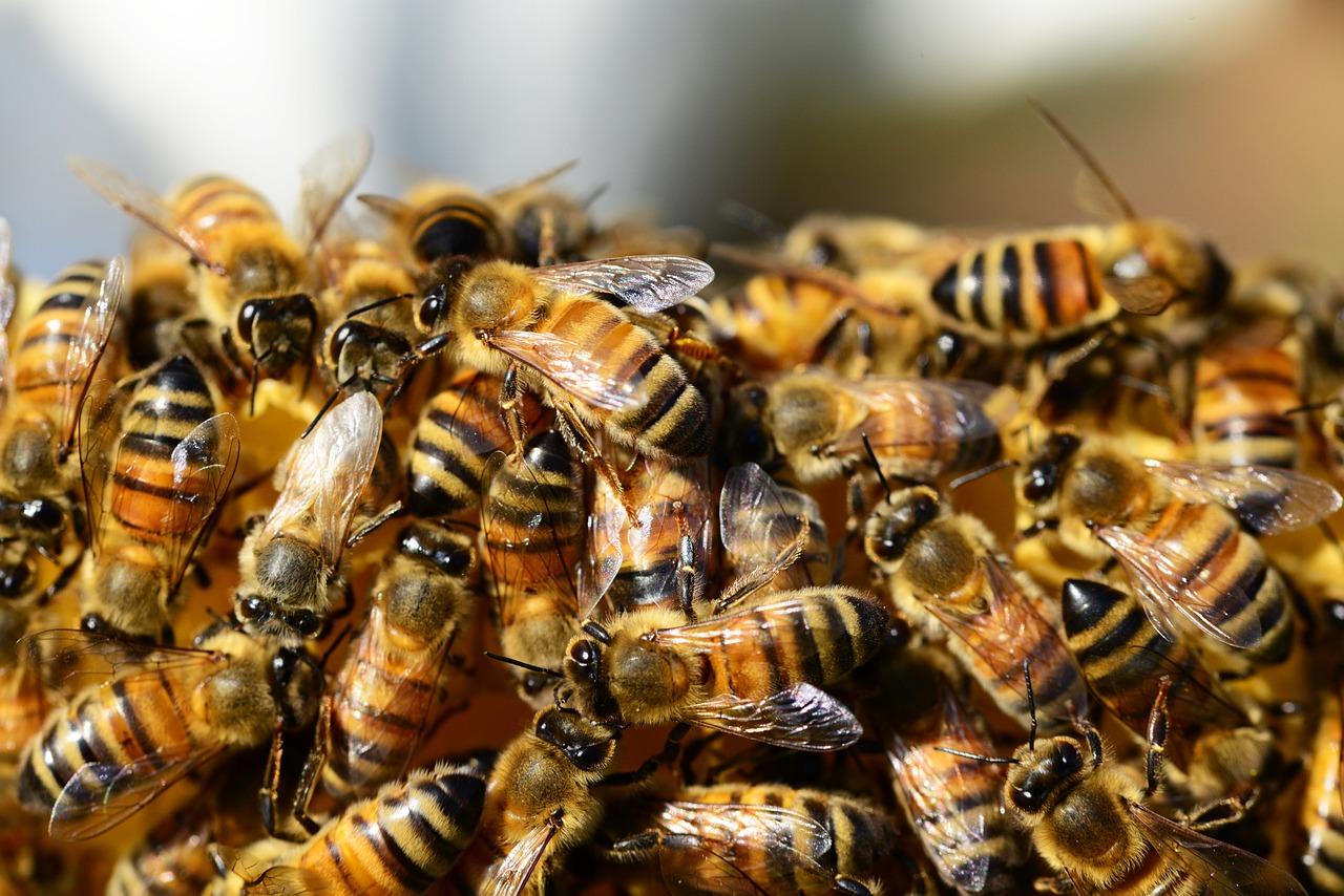 Miele e propoli, benessere naturale