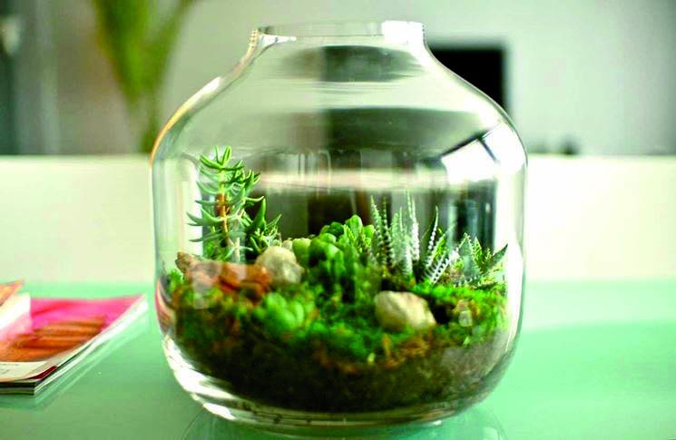 Composizione Piante Grasse In Vaso Di Vetro.Le Piante In Vasi Di Vetro E In Bottiglia Viridea