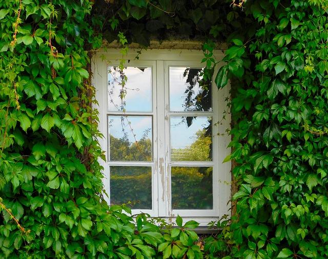 L'aria è più pura con le pareti verdi
