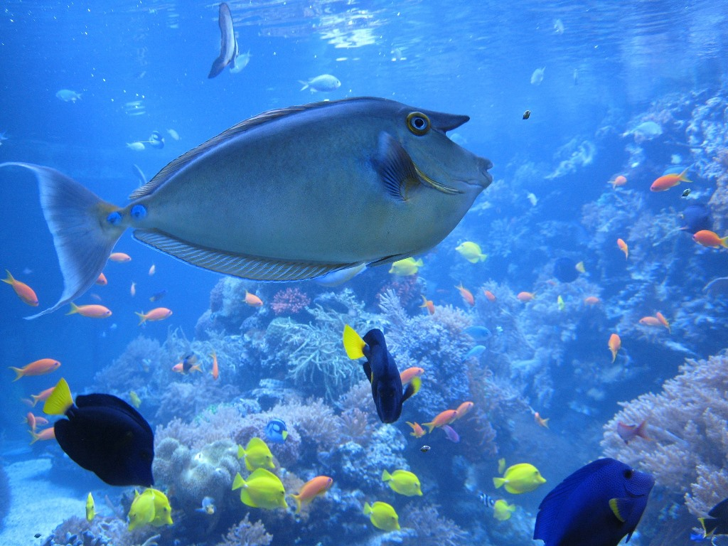 La saprolegnia dei pesci da acquario