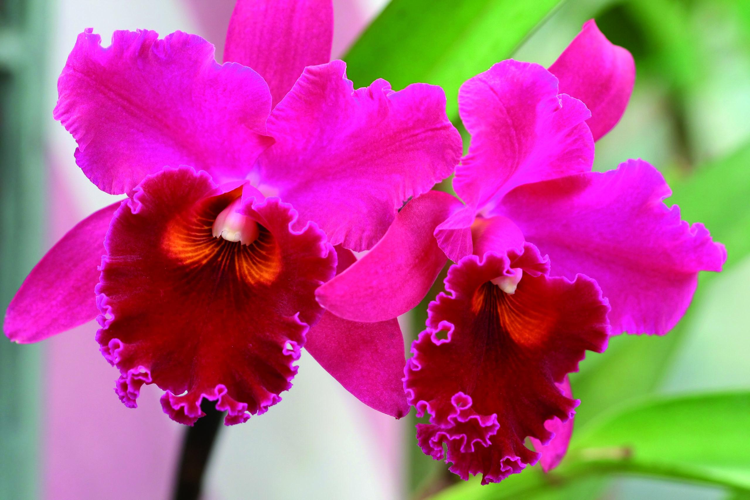 Orchidee da scoprire