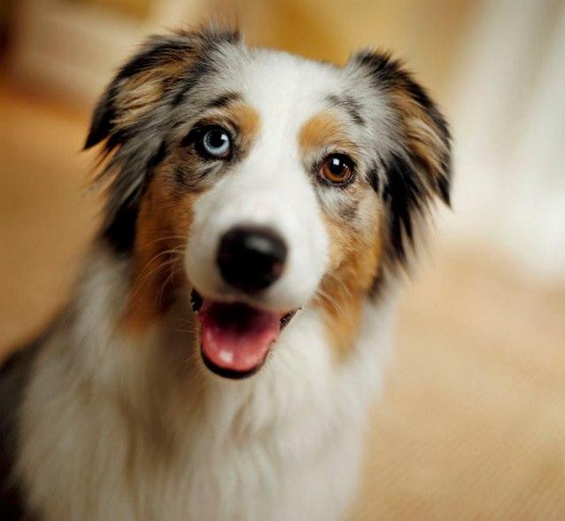 Conoscere, educare e comprendere il nostro cane!