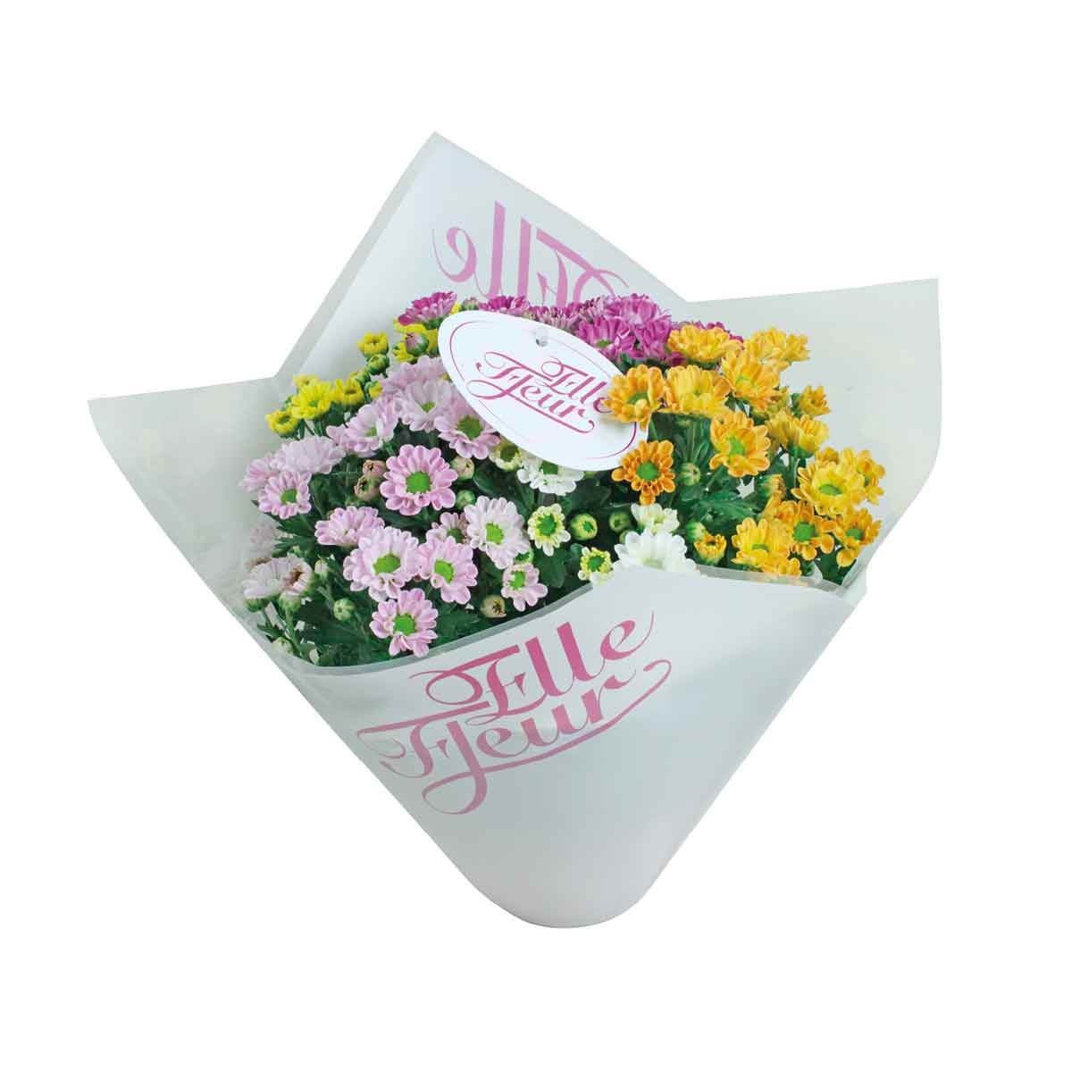 Crisantemi in varietà