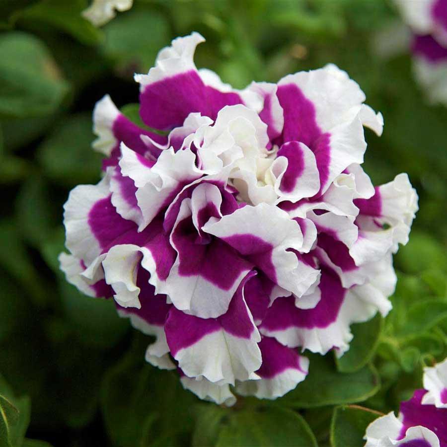I fiori vintage