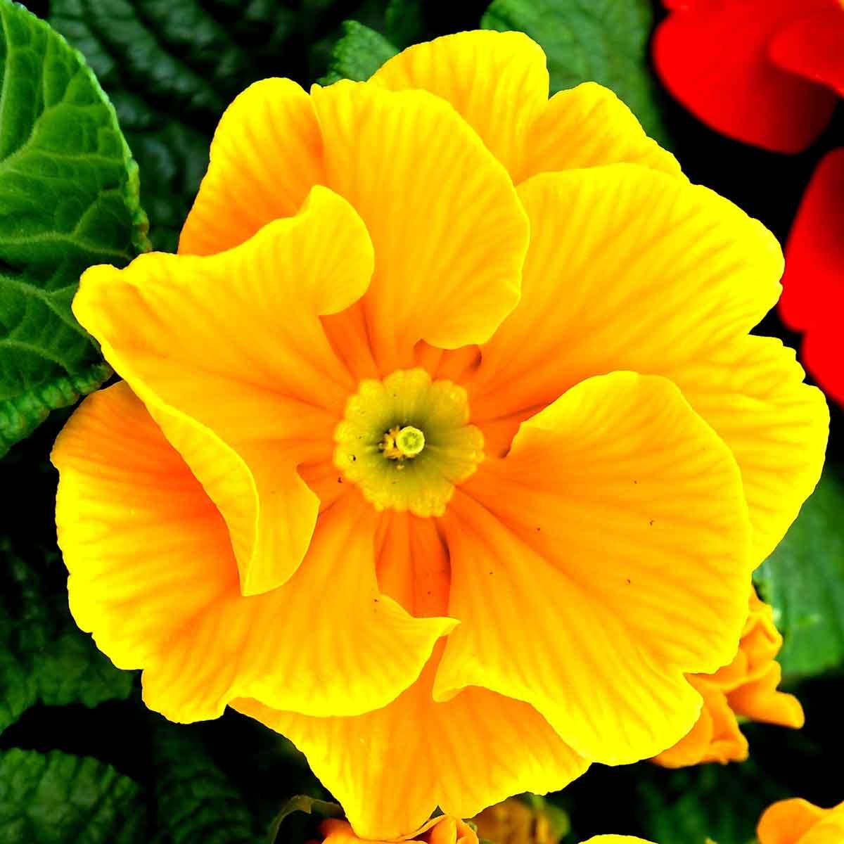 Marzo, quale fiori regalare alle donne?