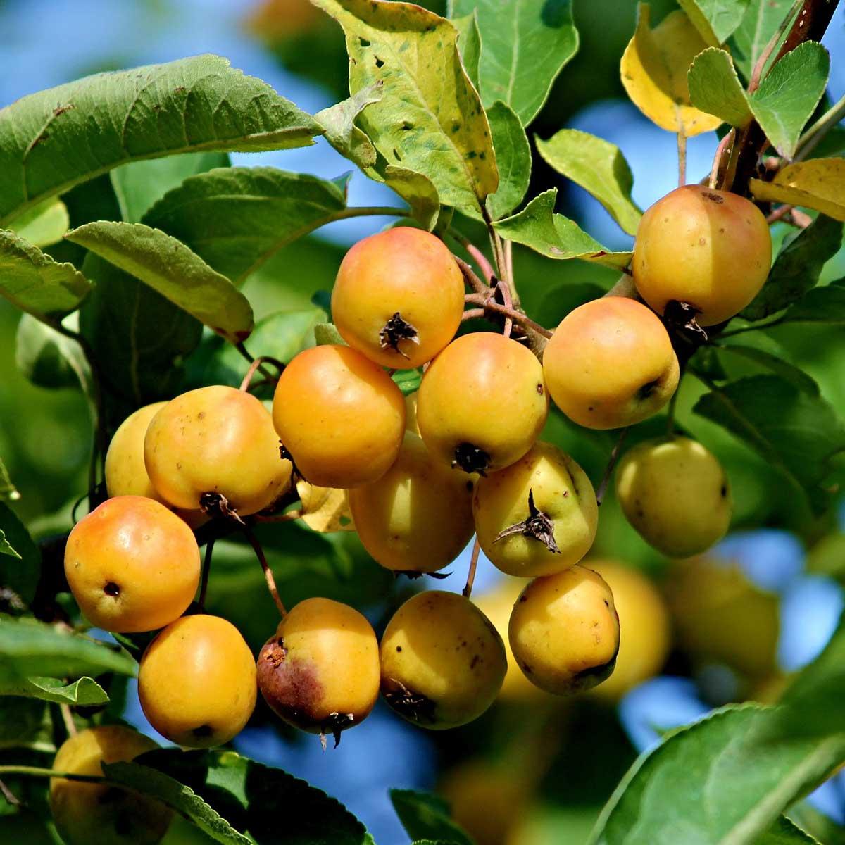 Piante da frutto dell'Oltrepo… con l'esperta!