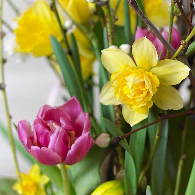Il risveglio di primavera in casa e in ufficio