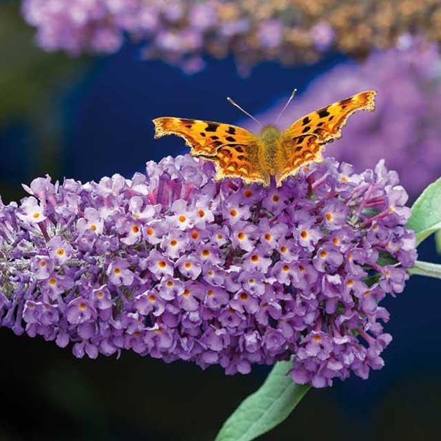 Un terrazzo per api e farfalle