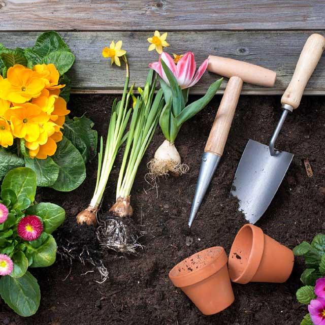 Primi segni di primavera: semine e trapianti