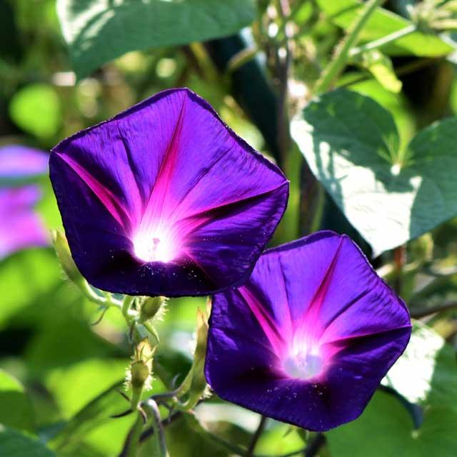 Una parete di fiori… con pochissime cure