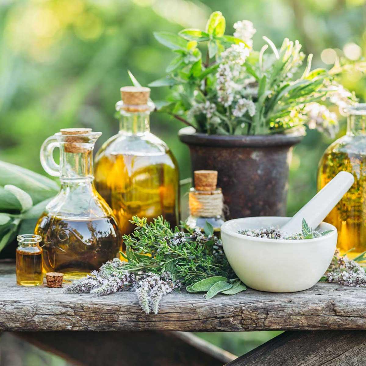Aromatiche e officinali insolite,  la salute a portata di mano