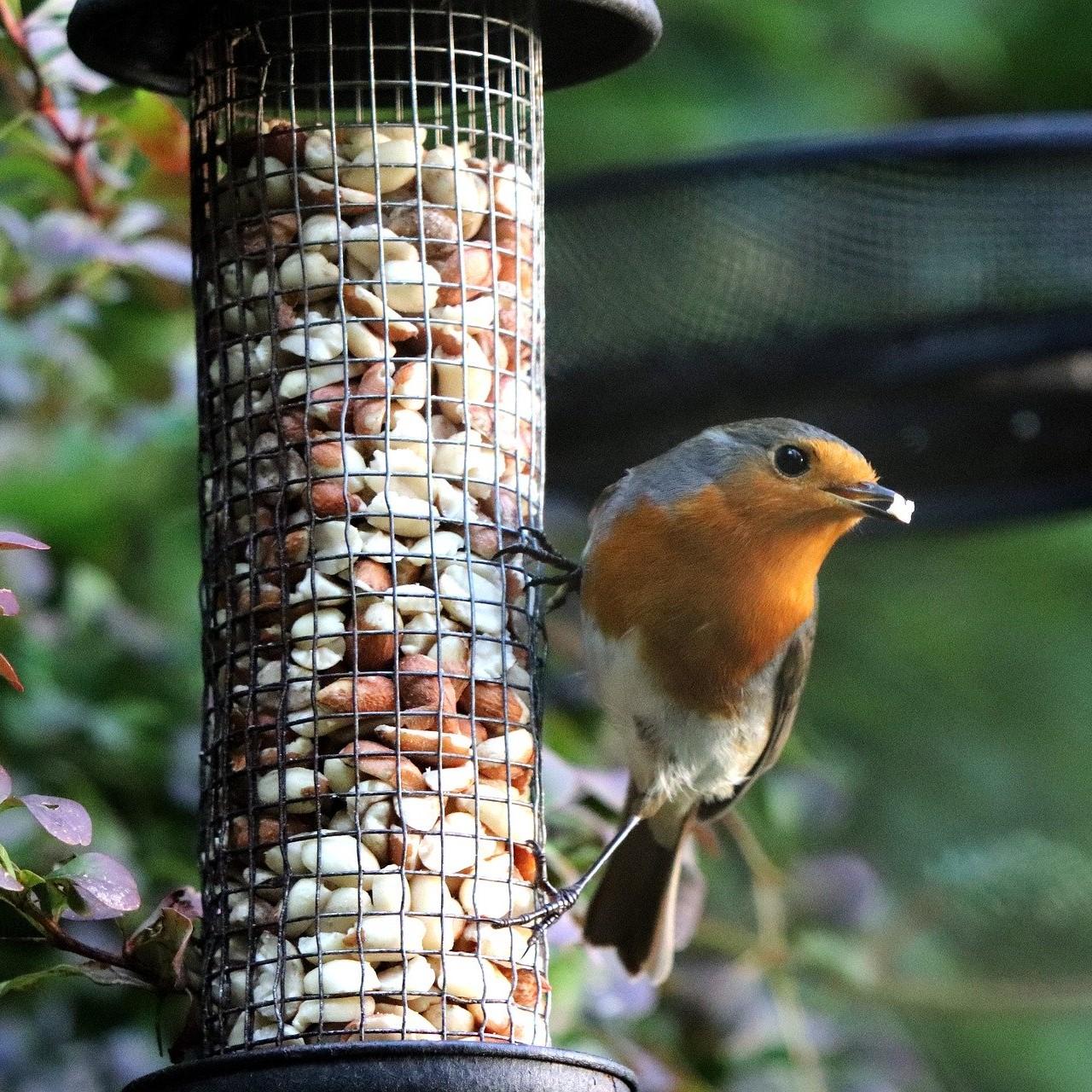 Come creare un rifugio per gli uccellini