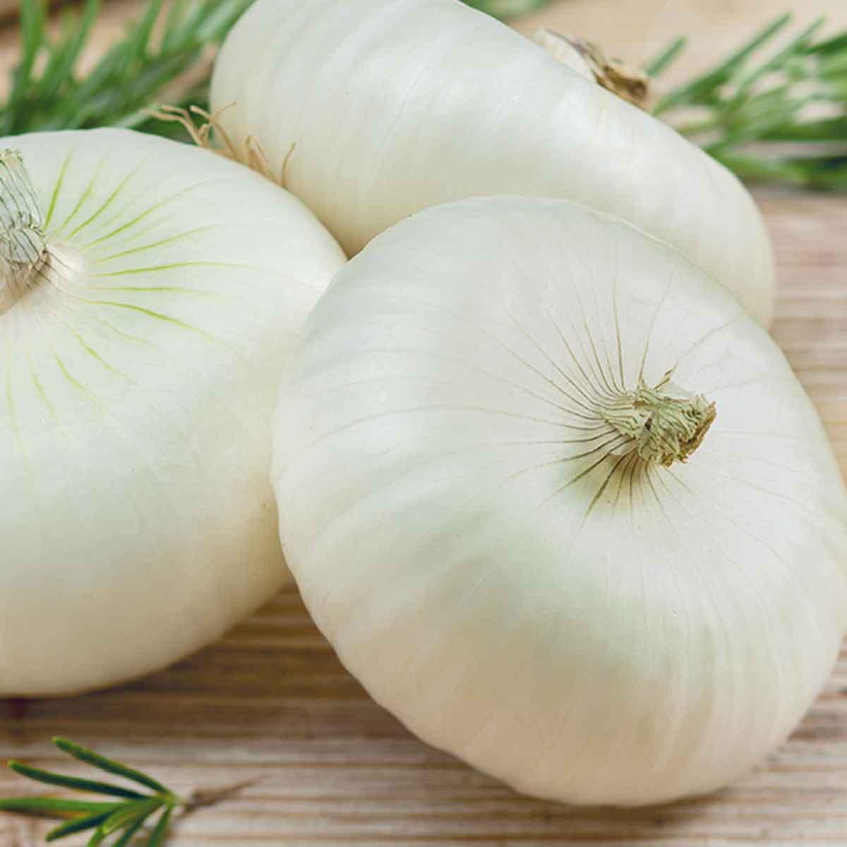 Cipolla bianca di Maggio in pack da 12 piante