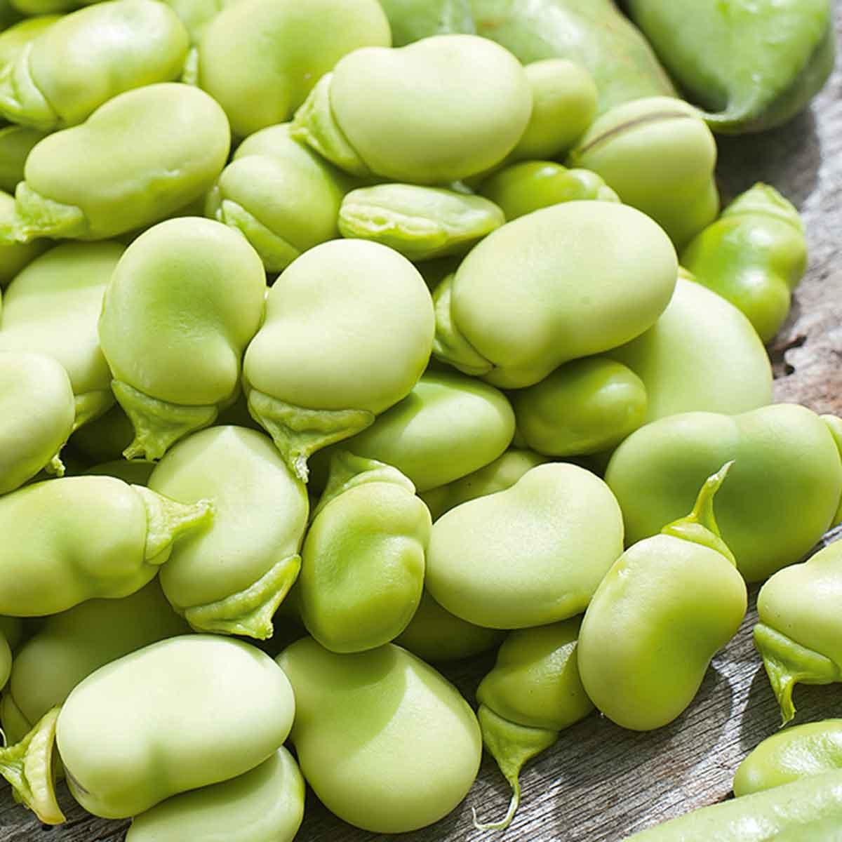 Fava Superaguadulce in pack da 12 piante