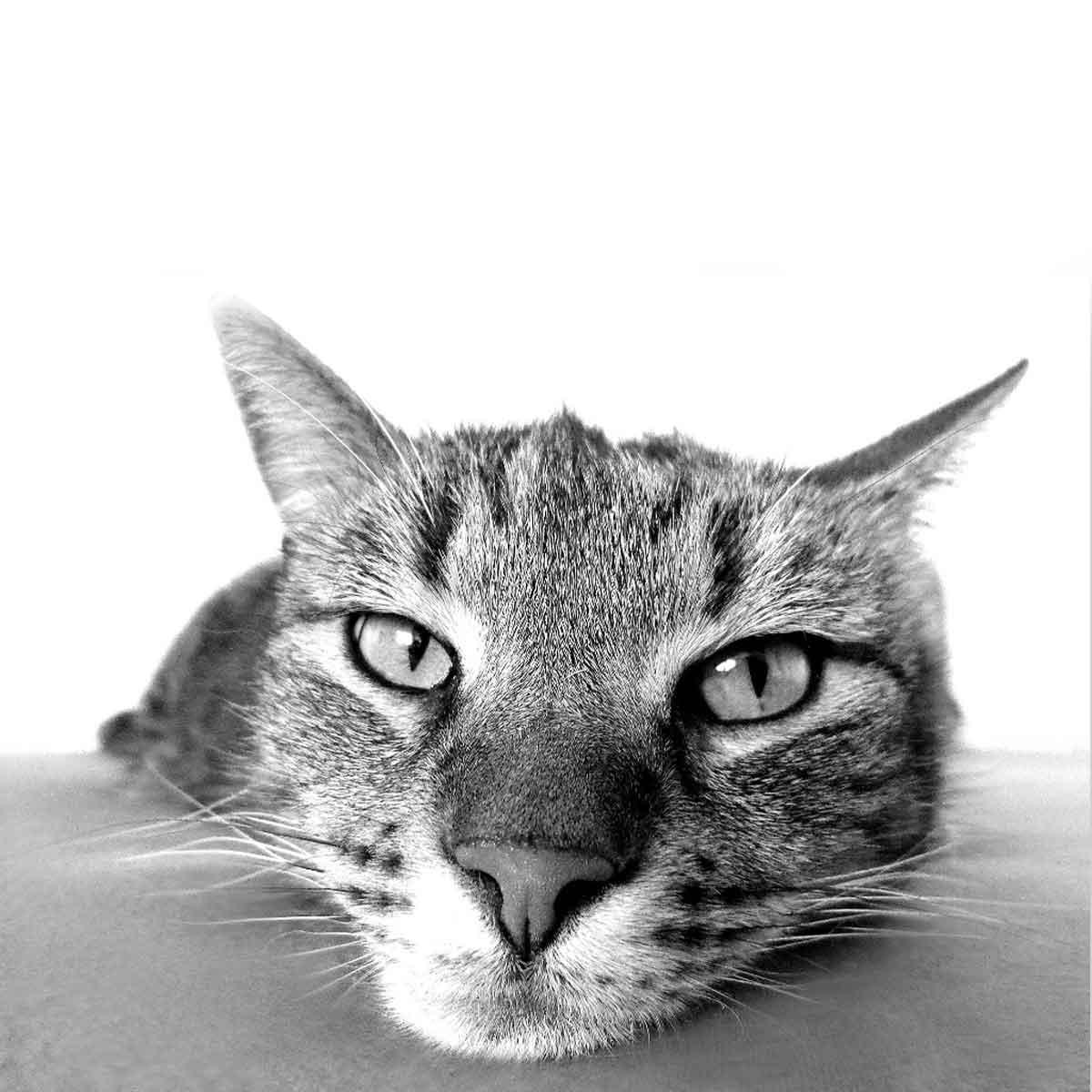 Il gatto e le pulci