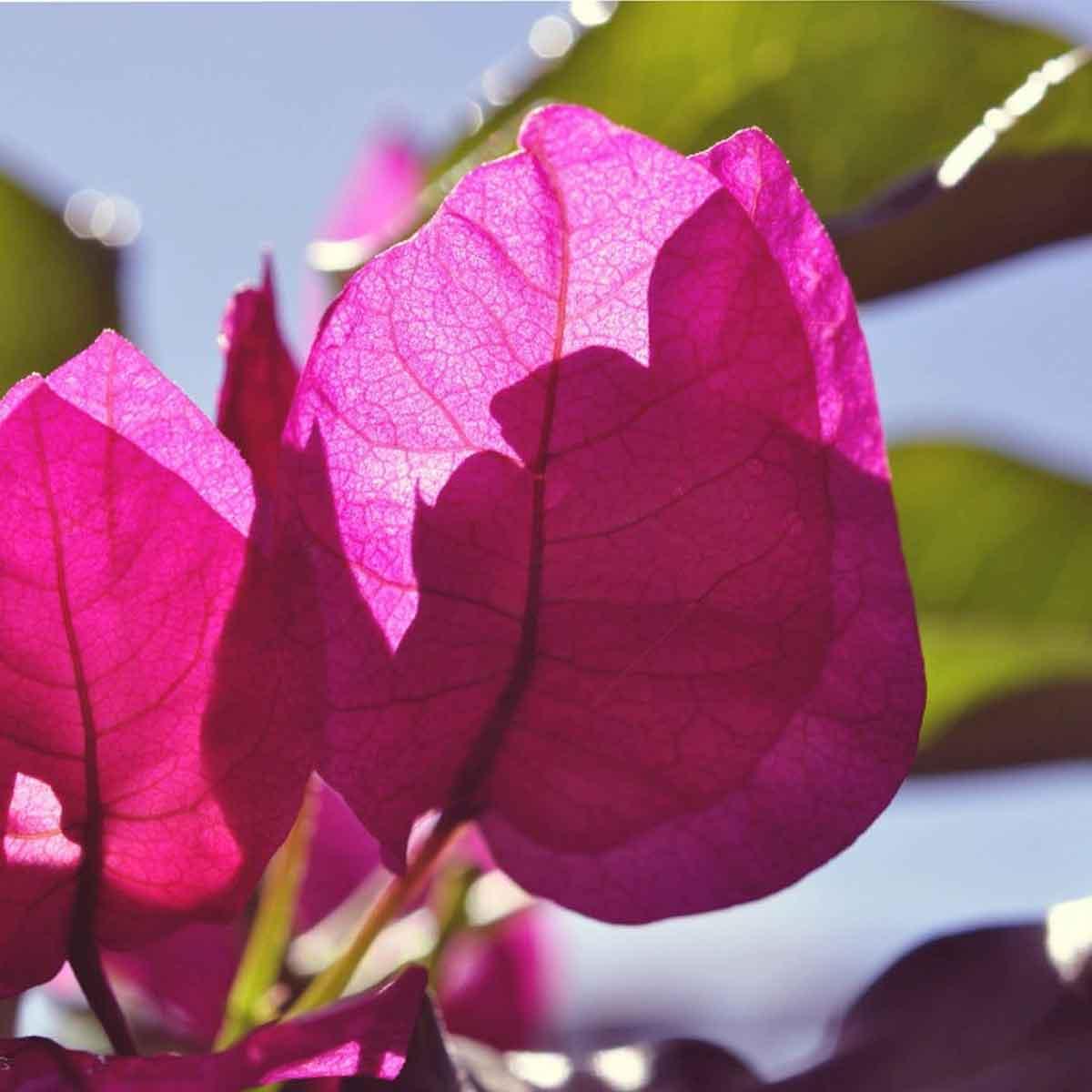 Le piante da sole