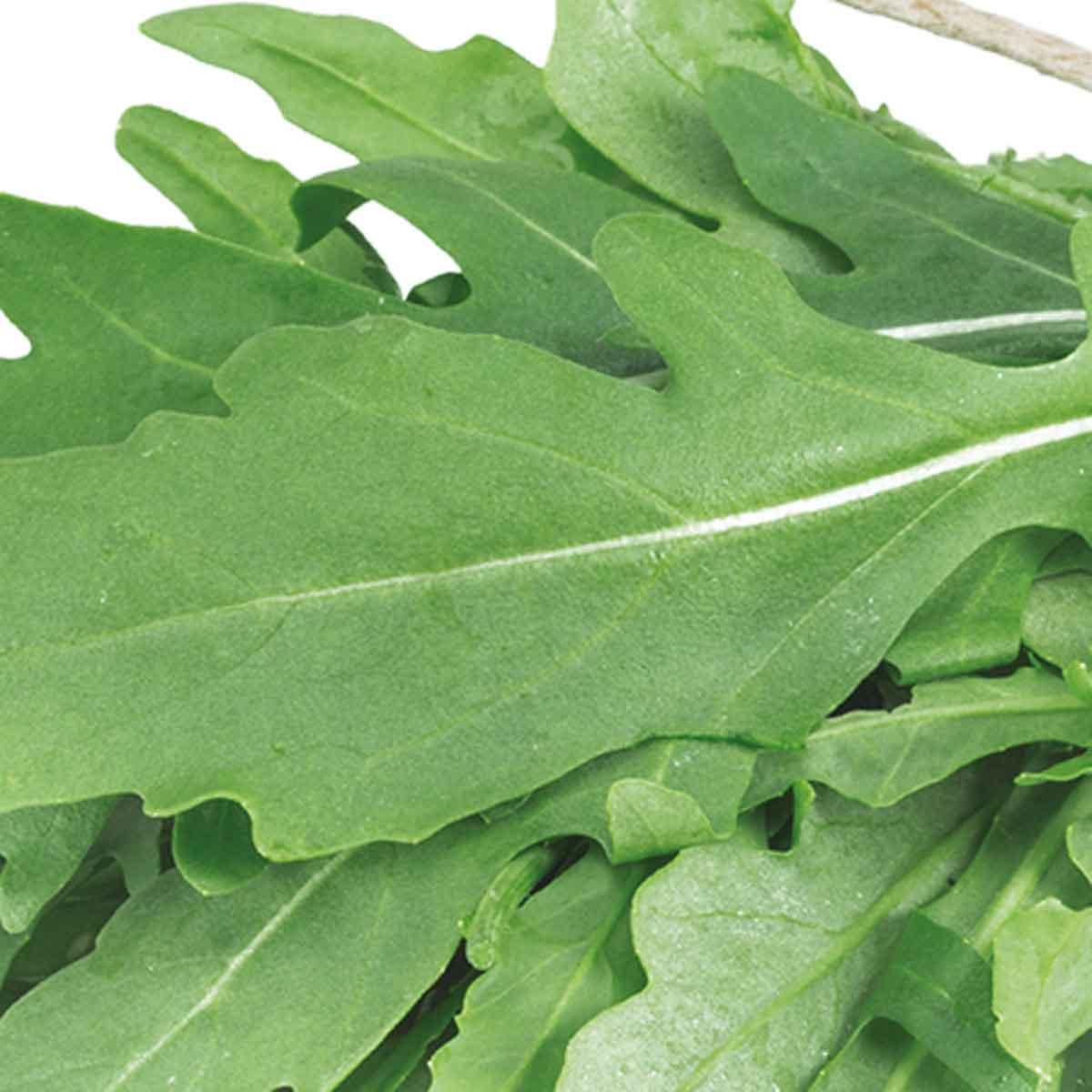 Rucola selvatica Letizia in pack da 6 piante