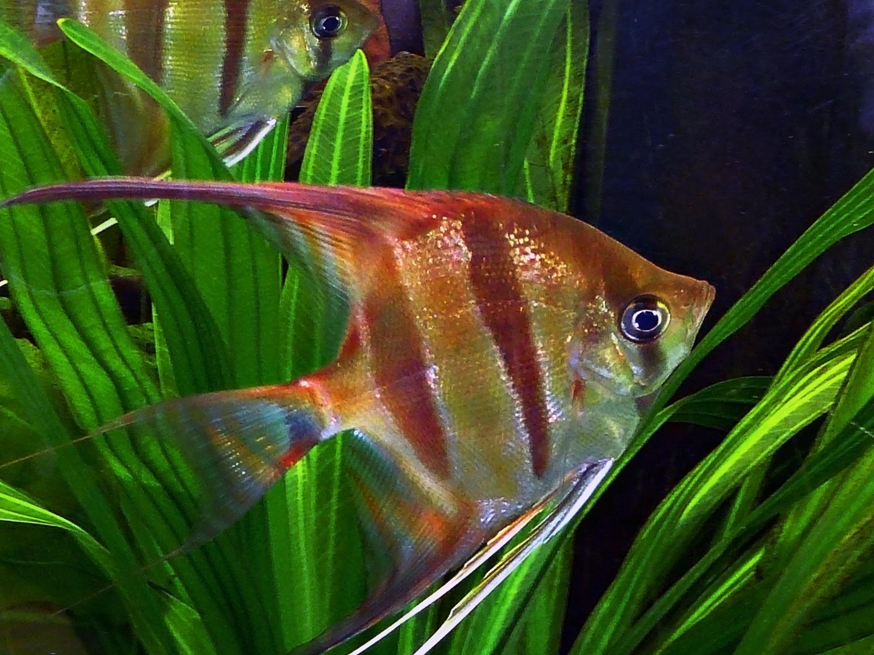 Acquario perfetto, con pesci in salute