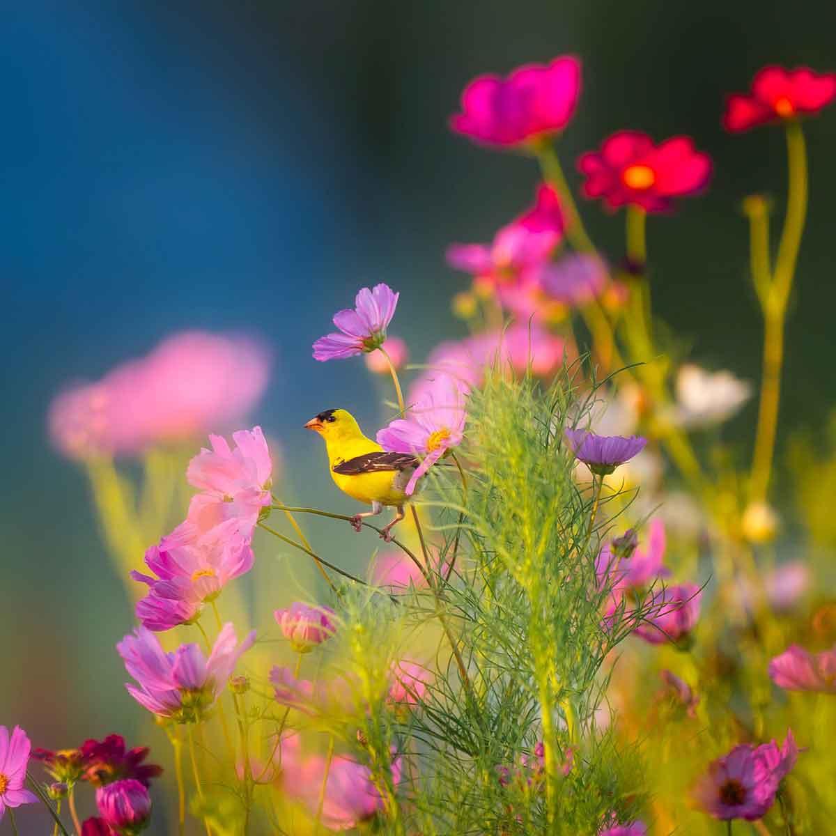 La cromoterapia con i fiori