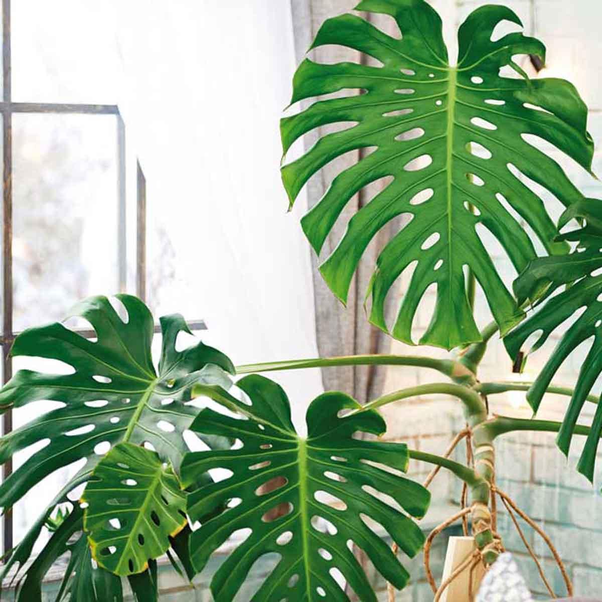 Le piante per una casa più verde e più sana