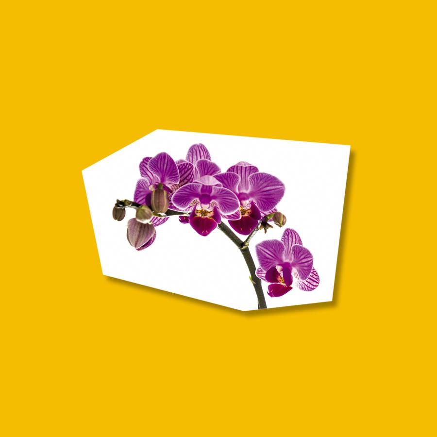 Le orchidee valgono il doppio!