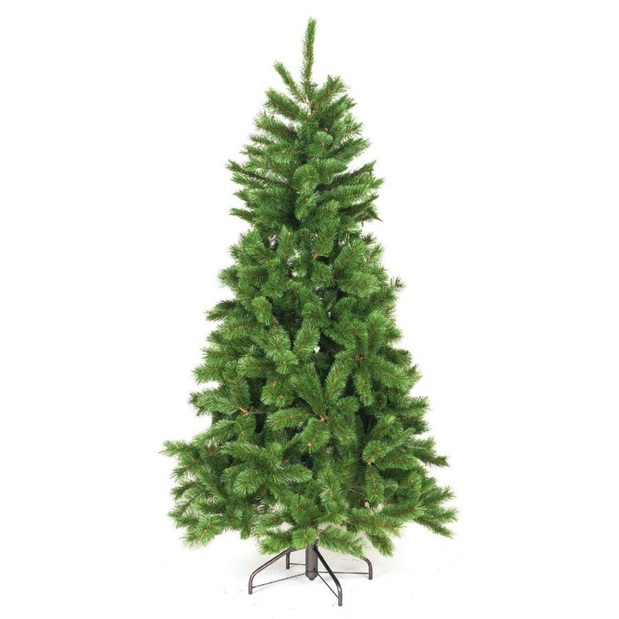 Abete Evergreen