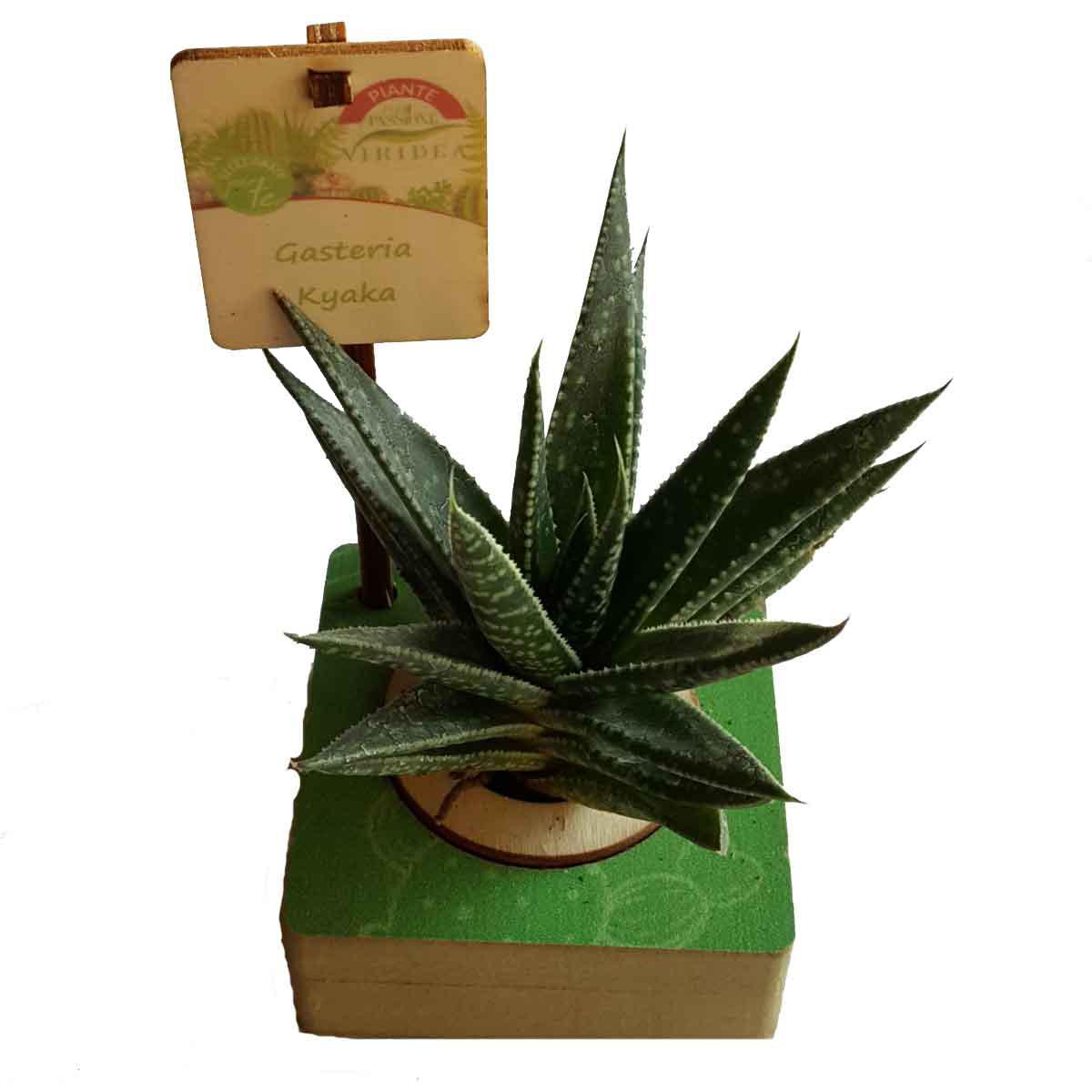 Per Passione – Succulente in varietà in cubo di legno